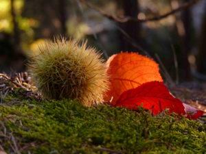 autunno-a18905961